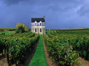 Chinon vineyard
