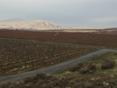 Kiona vineyard