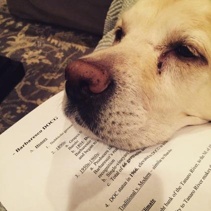 sanders study