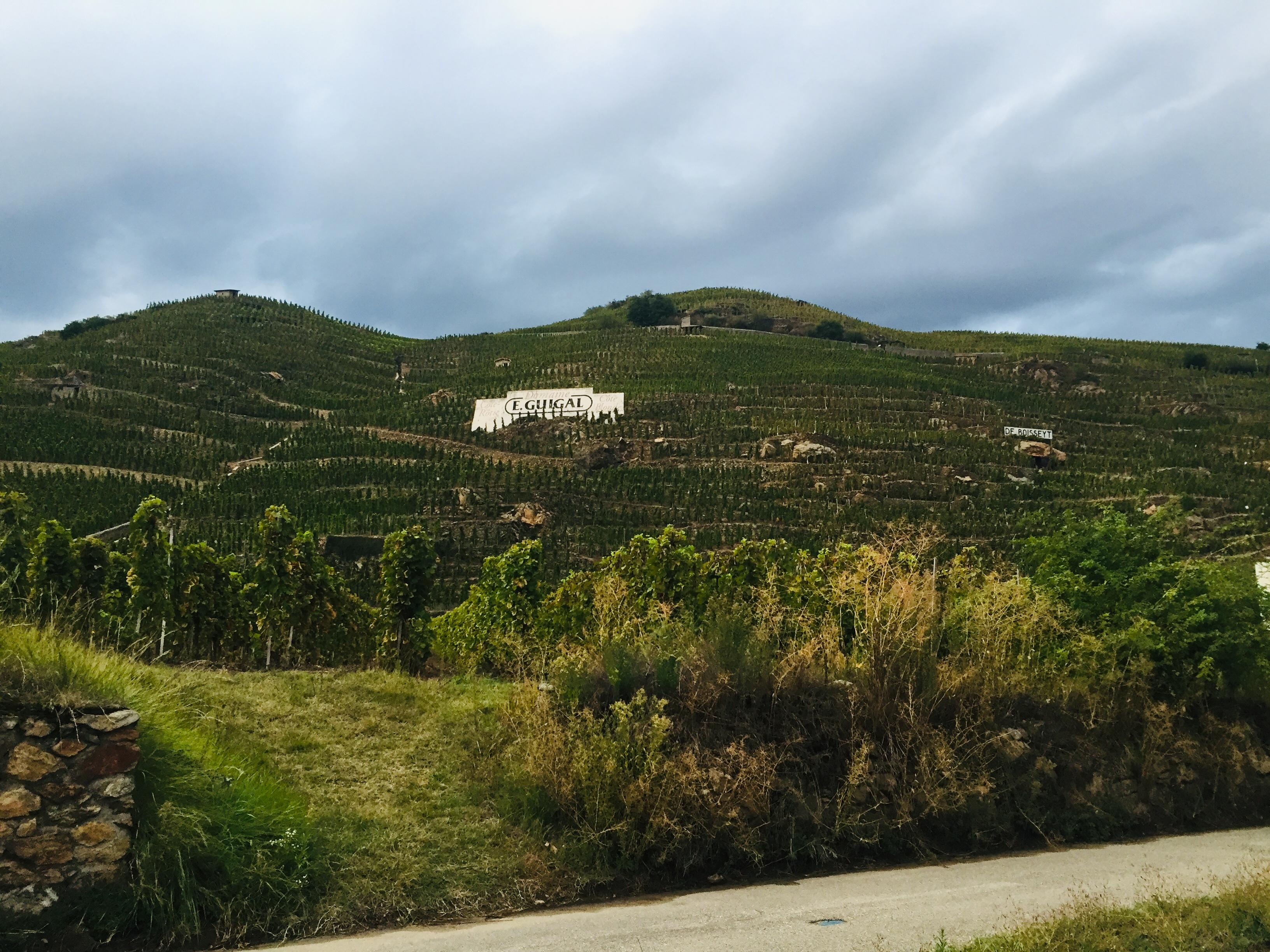 Guigal vineyards